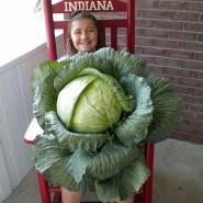 Abby - Indiana