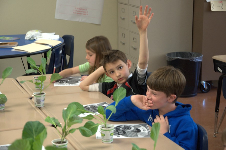 Student raising his hand about cabbage program