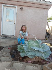 Arizona - Summer