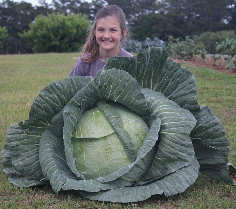 Karli - Alabama Winner