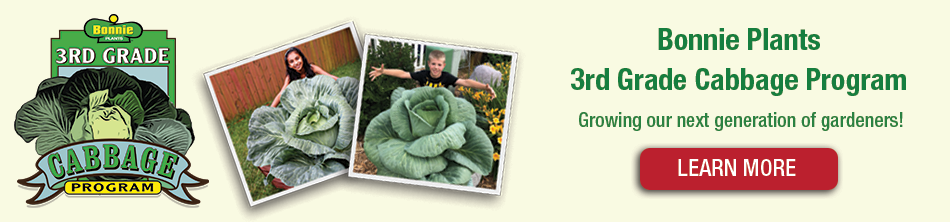 Welcome to Bonnie's 3rd Grade Cabbage Program