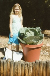 Growing Cabbage in a Container