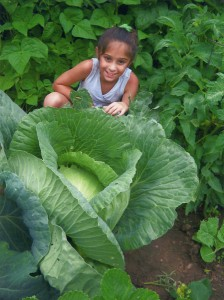 Girl in the garden with her cabbage